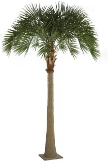 earthflora > outdoor palm trees