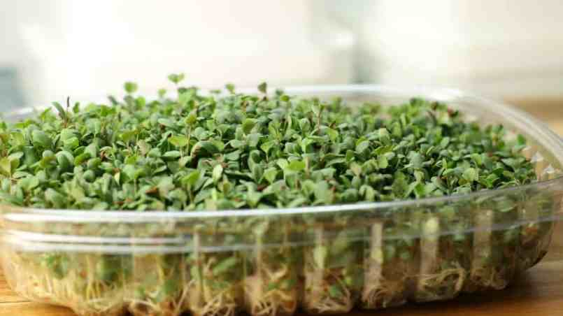 How to sprout seeds at home, easy and good for you!