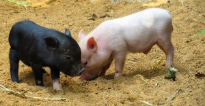 World Vegan Day - Go Vegan for the Animals