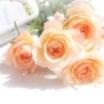 bg rosepink
