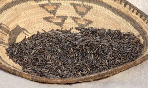 The White Earth Band of Ojibwe Legally Recognized the Rights of Wild Rice. Here's Why