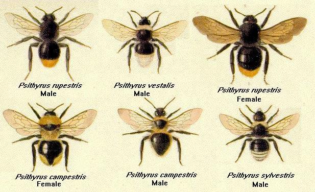 gordon s social bees