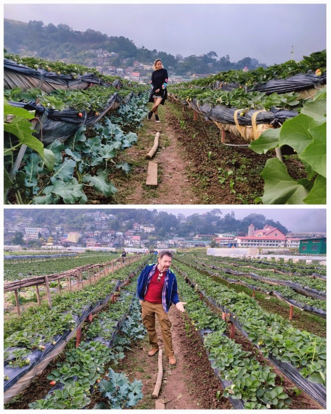 Strawberry Farm La Trinidad Benguet
