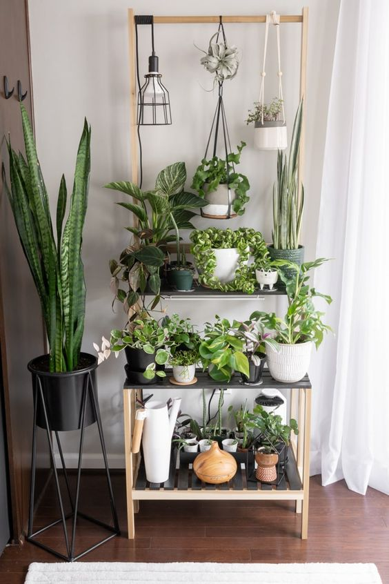 home garden indoor
