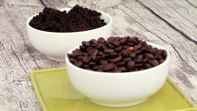 ants coffee grounds