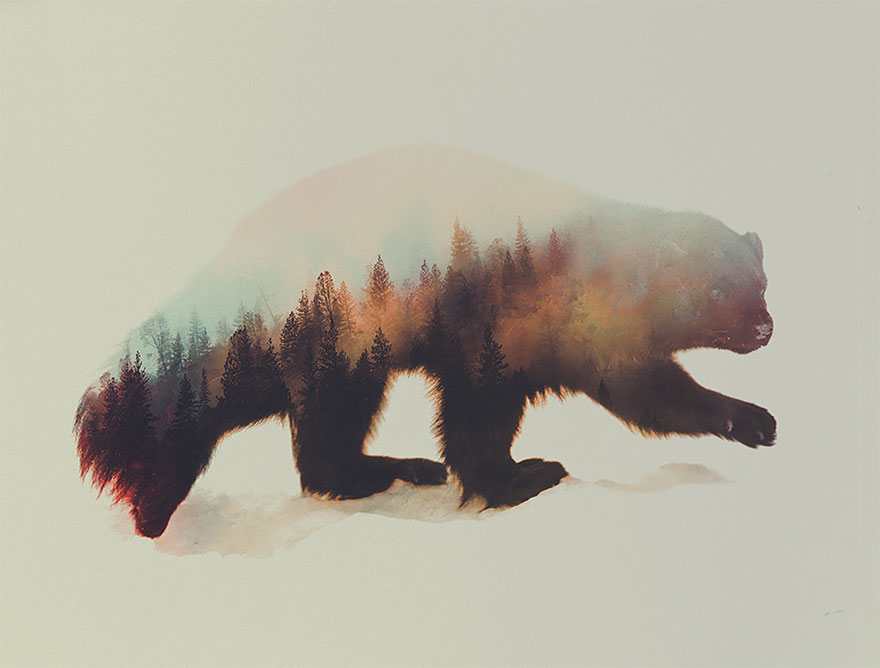 Fox Animal Wallpaper Double Exposure Animals And Their Habitats In One