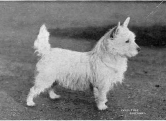 Dog Breeds 100 Years Apart Earthly Mission