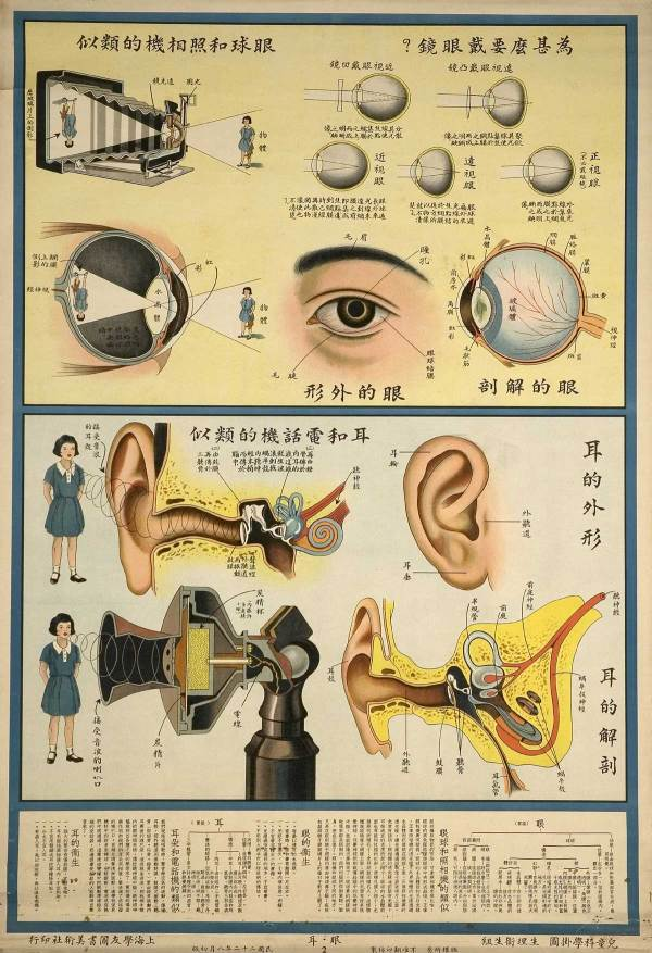 Vintage Medical Posters Human Body