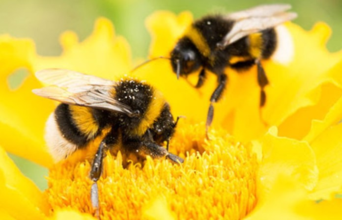 The Bumblebee Lifecycle | Earth Rangers: Where kids go to save animals!