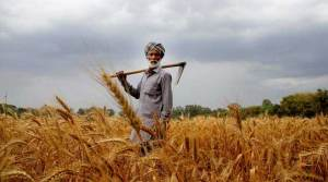 climate-change-impact-on-crop-production