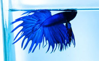How To Spot And Treat Common Betta Fish Diseases Earths