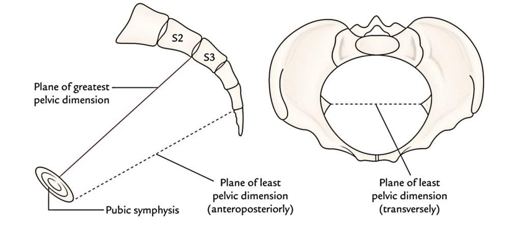 medium resolution of pelvic planes