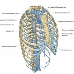 Easy Brain Diagram 98 Ford Contour Wiring Notes On 【azygos And Hemiazygos Veins】learn In Just 3 Mins!