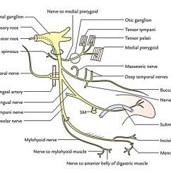 Facial Trigeminal Nerve Diagram 4 Pin Relay Wiring Fan Easy Notes On 【mandibular Nerve】learn In Just Minutes!