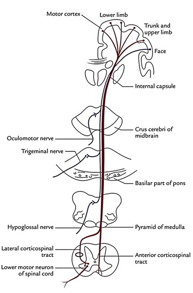 Easy Notes On 【Tracts of the Spinal Cord】Learn in Just 3