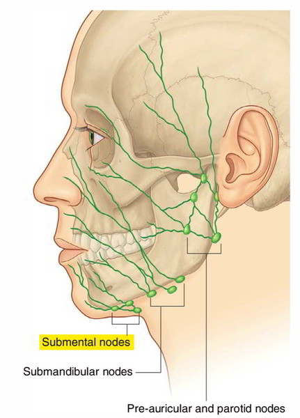 where are my lymph nodes diagram temperature controller wiring easy notes on submental learn in just 3 mins sub mental contain sinuses germinal centers trabeculae scavenger cells and reticular fibers conditions that can afflict the