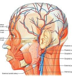 arterial supply of scalp [ 1250 x 982 Pixel ]