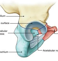 hip bone acetabulum [ 1035 x 800 Pixel ]