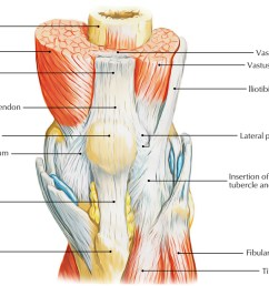 easy notes on patella knee cap learn in just 3 minutes earth s lab [ 1250 x 758 Pixel ]