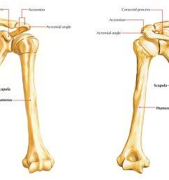 bones of upper limb humerus [ 1250 x 694 Pixel ]