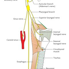 Vagus Nerve Diagram Prs 5 Way Rotary Switch Wiring Easy Notes On Learn In Just 4 Minutes Branches