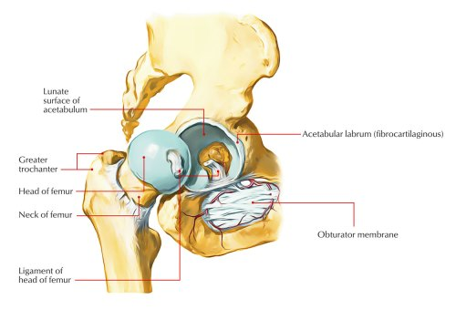 small resolution of hip joint