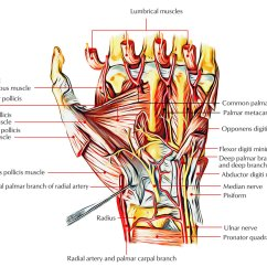 Hand Nerves Diagram Chevy Malibu Engine Easy Notes On Intrinsic Muscles Of The Learn In Just 3 Mins