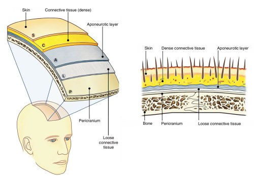 small resolution of scalp