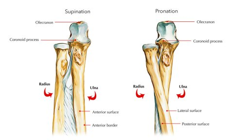 small resolution of ulna upper end