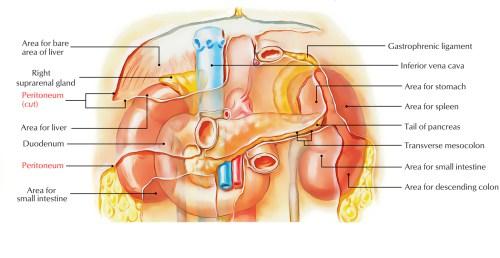 small resolution of peritoneum folds