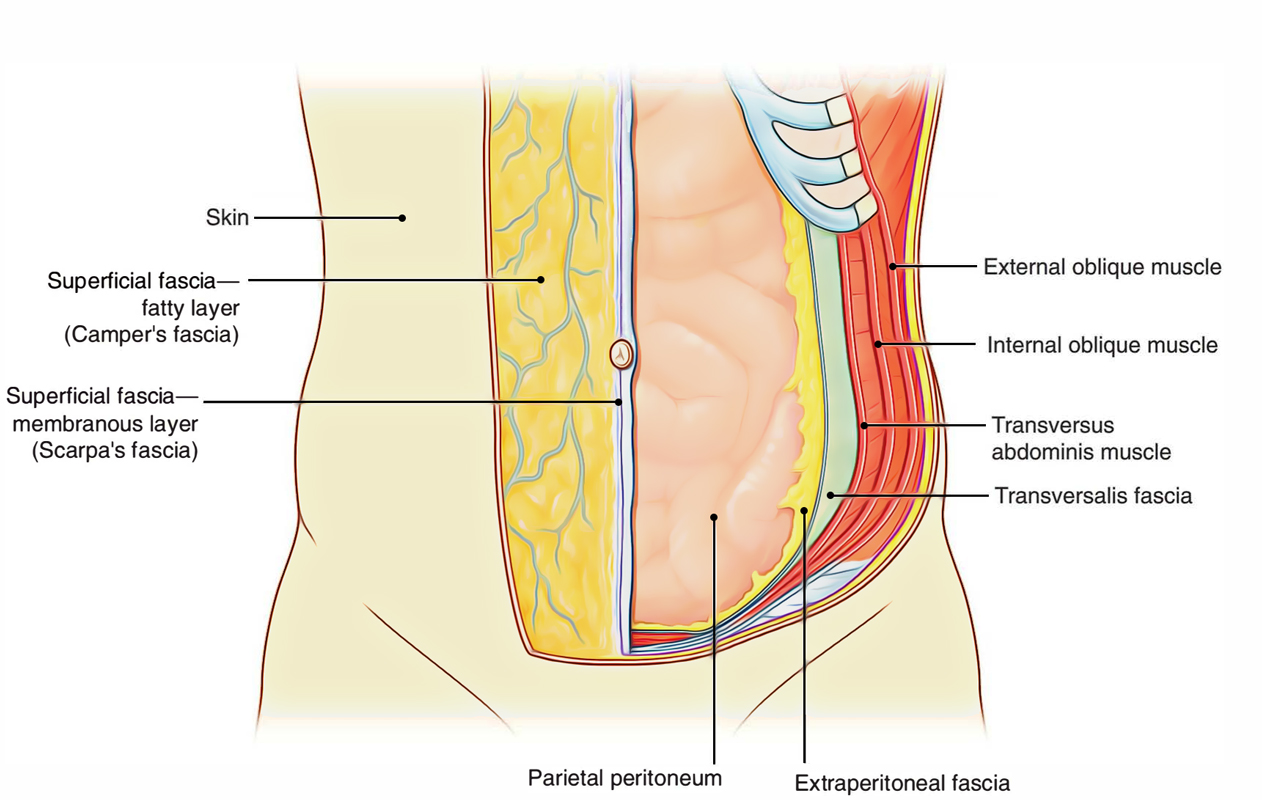 hight resolution of peritoneum