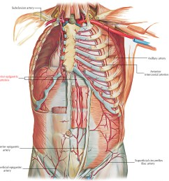 vascular diagram of neck [ 1250 x 1179 Pixel ]