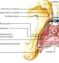 external urethral sphincter [ 1250 x 705 Pixel ]