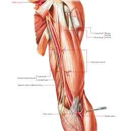 arteries of the upper limb axillary artery [ 1250 x 1413 Pixel ]