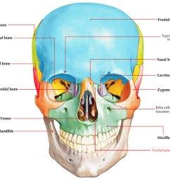 frontal process of maxilla [ 1024 x 853 Pixel ]