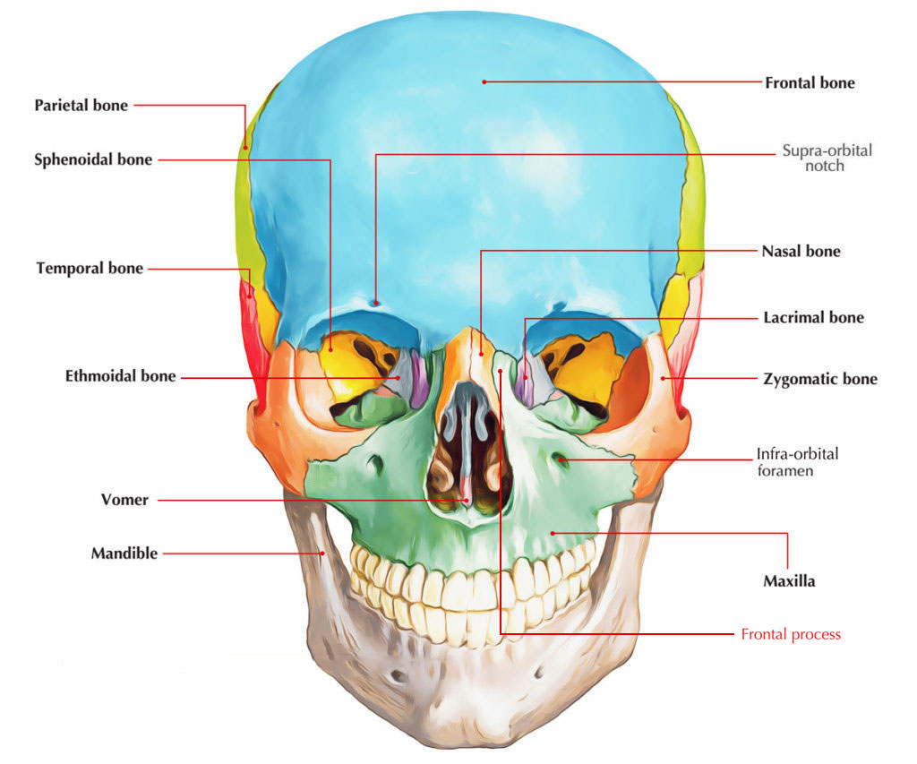 hight resolution of frontal process of maxilla