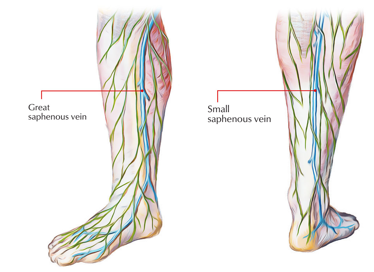 veins in the foot diagram heil wiring heat pump anatomy images human organs