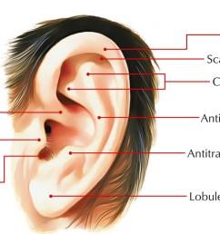 helix of the ear [ 1250 x 703 Pixel ]