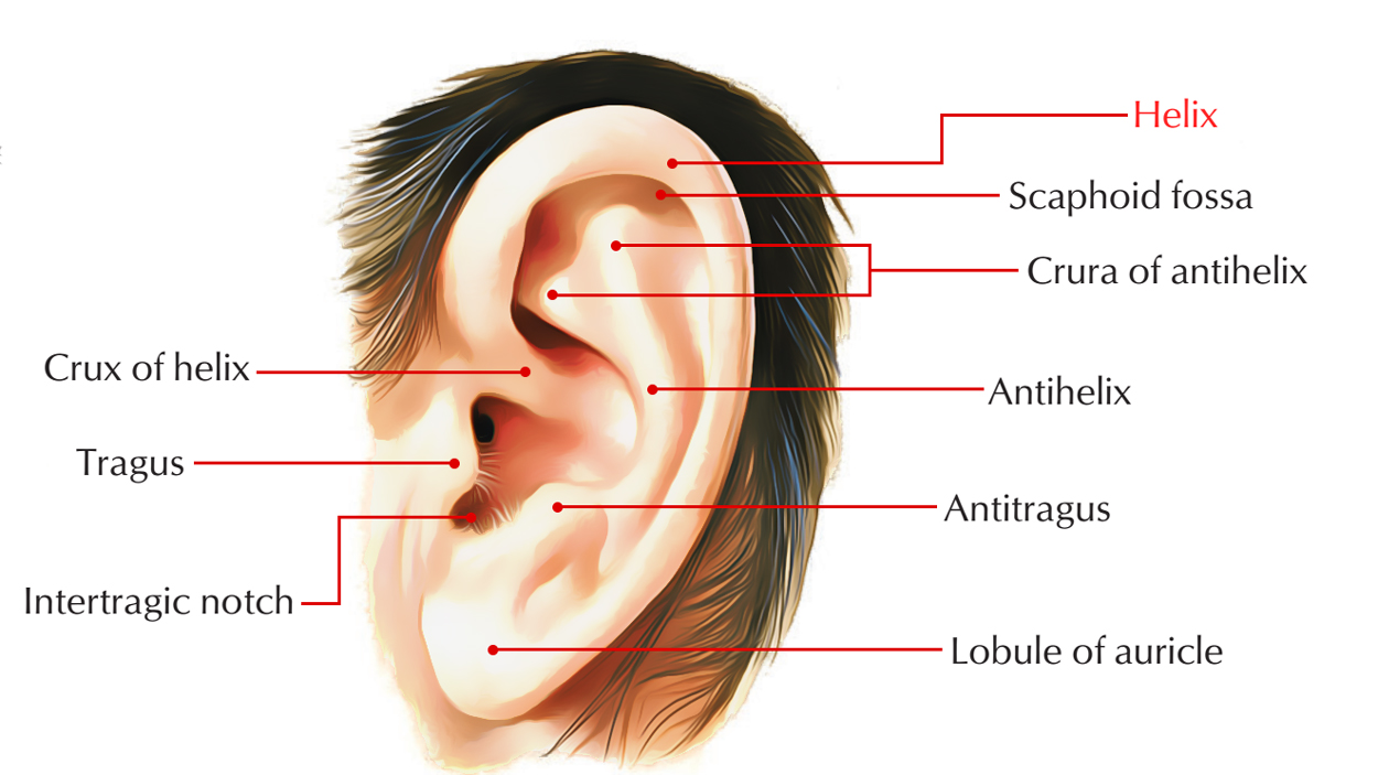 hight resolution of helix of the ear