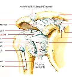 capsular ligament joint capsule  [ 1250 x 698 Pixel ]