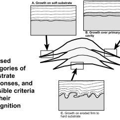 Slug Anatomy Diagram Cat6 Plug Wiring Sponge Answer Key Imageresizertool Com