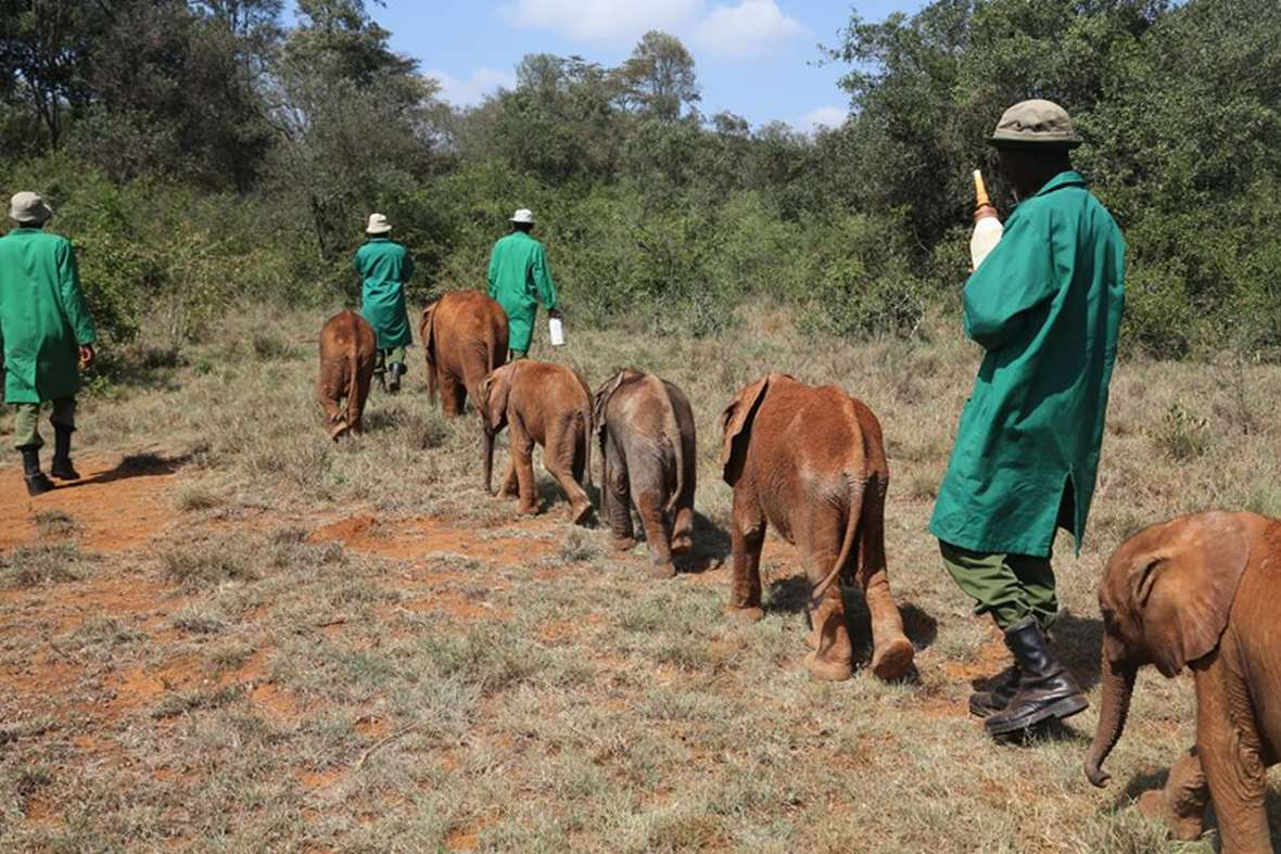 https://i0.wp.com/www.earthtouchnews.com/media/574434/elephant-orphanage-babies_2014_10_24_GalleryLarge.jpg