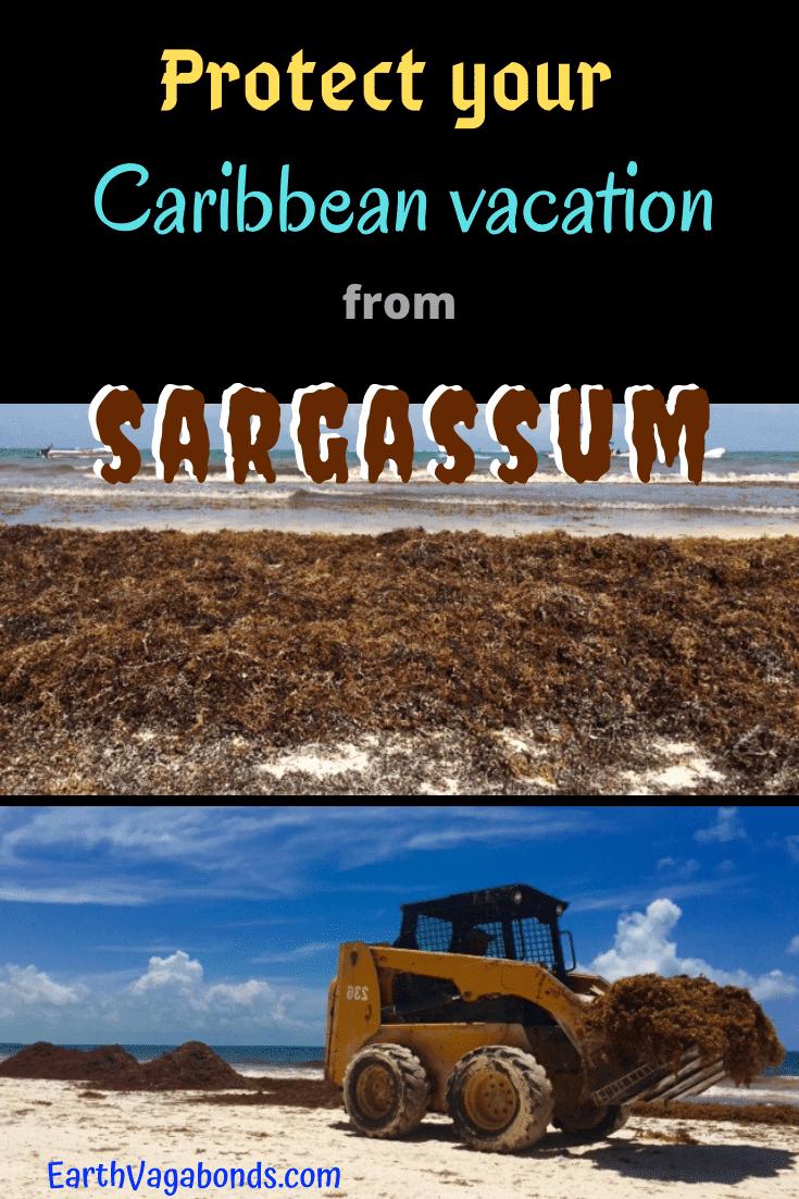 sargassum in the caribbean