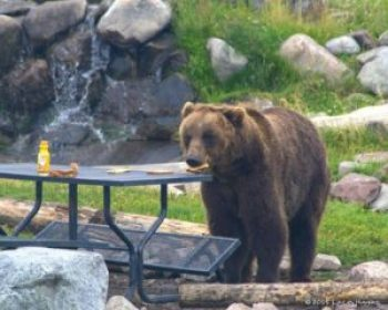 Problem Bear