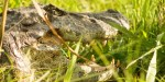 Esteros del Iberá —Rewilding & Inspiring