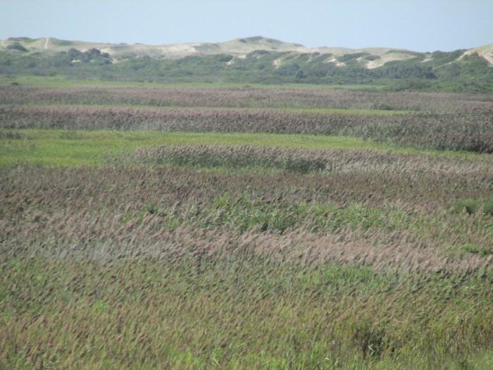 Salt Meadow, Head of the Meadow Beach