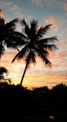 10 - Palm Tree, W Palm, FL