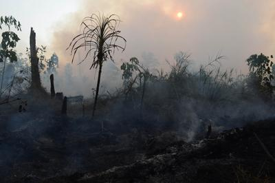 Smoke is seen while emanating from the grounds of a private palm oil concession company, formerly a peatland forest area, on 29 June 2013 in the Kampar district (Riau province), on Sumatra island. (Photo: AAP)