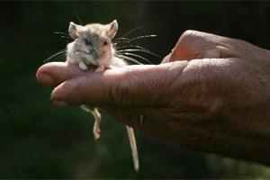 Third hantavirus death linked to Yosemite National Park – East Bay ...