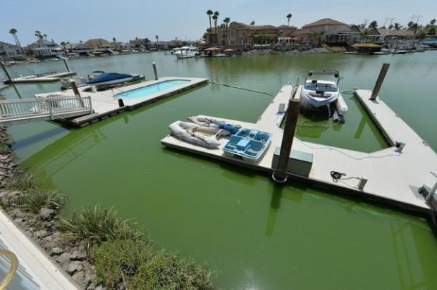 Blue-green algae is photographed in a backyard dock in a private-access area of a man-made bay in Discovery Bay, Calif., on Wednesday, July 27, 2016. Contra Costa County health officials are warning Discovery Bay residents to avoid coming into contact with the water in the area after field tests showed that it contains blue-green algae. The bacteria can cause a variety of ailments, including rashes and other allergic reactions, skin and eye irritation and an upset stomach. Exposure to high levels can lead to serious illnesses and even death, according to the California Department of Public Health. (Doug Duran/Bay Area News Group)